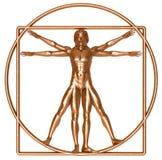 vitruvian bronze man royaltyfria foton