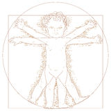 Vitruvian child. Vector drawing of Vitruvian child Royalty Free Stock Image
