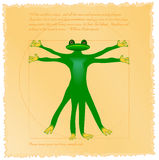 Vitruvian frog Stock Images