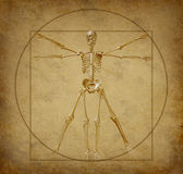 Vitruvian-human-diagram-grunge Royalty Free Stock Photos