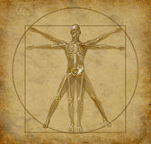 Vitruvian-human-diagram-grunge Royalty Free Stock Images