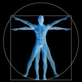 Vitruvian human or man conceptual 3d proportion anatomy body Royalty Free Stock Photos