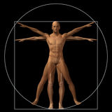 Vitruvian human or man conceptual 3d proportion anatomy body Stock Photo