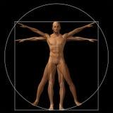 Vitruvian human or man conceptual 3d proportion anatomy body Stock Photo