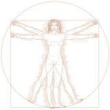 vitruvian kvinna Arkivfoto