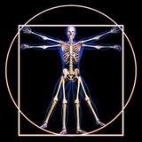 Vitruvian man with bones. Concept royalty free stock images