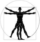 Vitruvian Man Da Vinci Style Figure Royalty Free Stock Photography