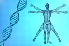 Vitruvian man with DNA. DNA molecules and virtuvian man on a blue background royalty free illustration