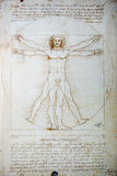 Vitruvian Man Drawing. The Vitruvian Man is a world-renowned drawing created by Leonardo da Vinci Royalty Free Stock Photo