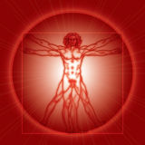 The Vitruvian man (Homo vitruviano). Red version. «HOMO VITRUVIANO». The Vitruvian man / Leonardo's man. Detailed drawing on basis of Stock Images
