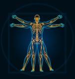 Vitruvian man vector illustration