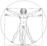 Vitruvian Man Leonardo da Vinci royalty free illustration