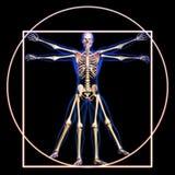 Vitruvian man med ben royaltyfria bilder