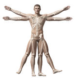 Vitruvian man - skeleton Stock Images