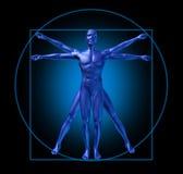 Vitruvian Mann des menschlichen Diagramms Stockbilder