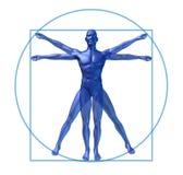 Vitruvian Mann des menschlichen Diagramms getrennt stock abbildung