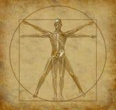 Vitruvian-umano-schema-grunge Immagini Stock Libere da Diritti