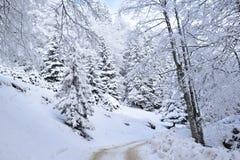 Vitskog i vinter royaltyfri bild