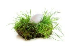 Vitt ägg i ett stycke av torva som isoleras på vit bakgrund Arkivfoto