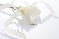 Vitt blomma och band royaltyfri foto