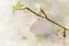Vitt easter ägg och körsbärsröd blomning på en pastellfärgad grön rosa backg Royaltyfri Bild