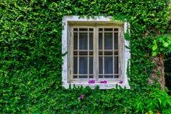 vitt fönster Arkivbild