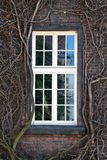 Vitt fönster med vinrankor arkivfoto