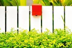 Vitt fenecgräsplanblad och röd brevlåda Royaltyfri Bild
