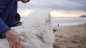 Vitt fluffigt somayed hundsammanträde med en flicka på stranden som har gyckel Sammanträde för ung kvinna på sanden och omfamna h arkivfilmer