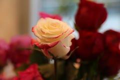 Vitt grunt djup för röda rosor av sparat Royaltyfri Fotografi