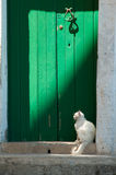 Vitt kattsammanträde mot en grön dörr. Arkivbild