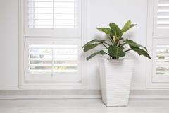 Vitt kontorsvägg, fönster och gräsplanträd Arkivfoto