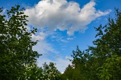Vitt moln över mörk skog royaltyfria bilder