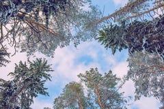 Vitt och kallt trä Många snöar på vintern 2019 Loppfoto royaltyfri foto
