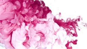 Vitt och rosa färgpulver i vatten royaltyfria bilder