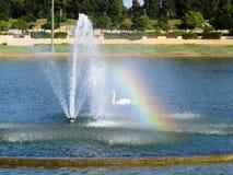 Vitt sewan i en springbrunnregnbåge arkivfoton