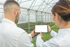 Vitt skärmminnestavlaväxthus Jordbruks- teknikerer som använder fliken royaltyfri foto