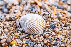 Vitt skal på en kust Royaltyfri Foto