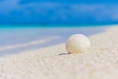Vitt snäckskal i sanden på stranden Arkivbilder