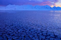 Vitt snöig berg, blå glaciär Svalbard, Norge Is i havet Isbergskymning i nordpolen Rosa färgen fördunklar med isisflak _ Royaltyfria Foton