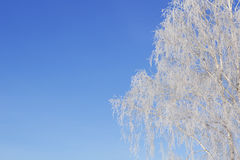 Vitt snöig för härlig vinter med snö på trädfilialer Royaltyfria Bilder