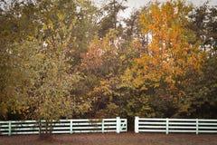 Vitt staket Fall Trees royaltyfria bilder