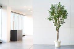 Vitt tomt kontorsrum med den gröna växten royaltyfri bild
