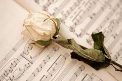 Vitt torka rose royaltyfri bild