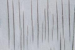 Vitt trä med sprickatextur arkivbild