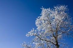 Vitt träd med blå himmel Arkivbild