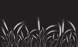 Vitt vete som isoleras på svart bakgrund Arkivbild