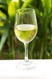 Vitt vin Royaltyfria Foton