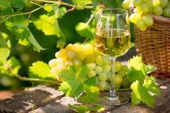 Vitt vin i exponeringsglas royaltyfria bilder