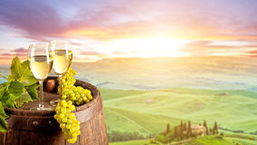 Vitt vin med trumman på vingård i Italien arkivbilder